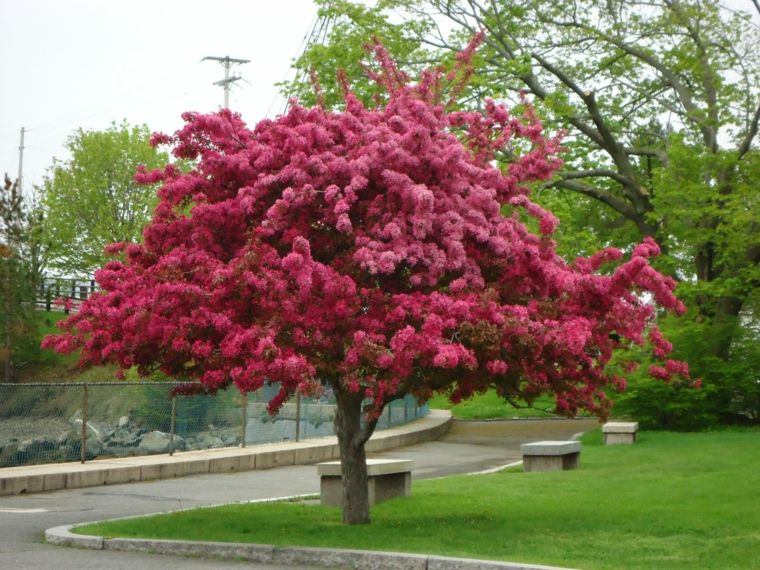 Rboles de jard n para colorear el exterior jardines for Arboles ornamentales jardin