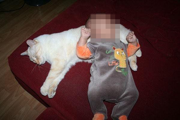 No es cierto que los gatos atacan a los bebés