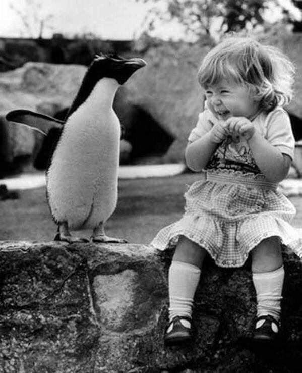 A young girl meeting a penguin for the first time.