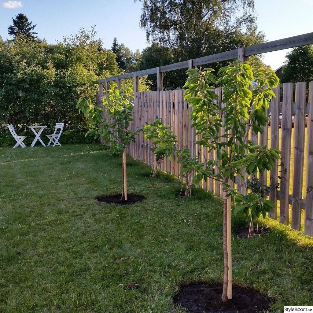 Trädgård plank trädgård : körsbärsträd,plank,kaprifol | HOME // Garden | Pinterest ...