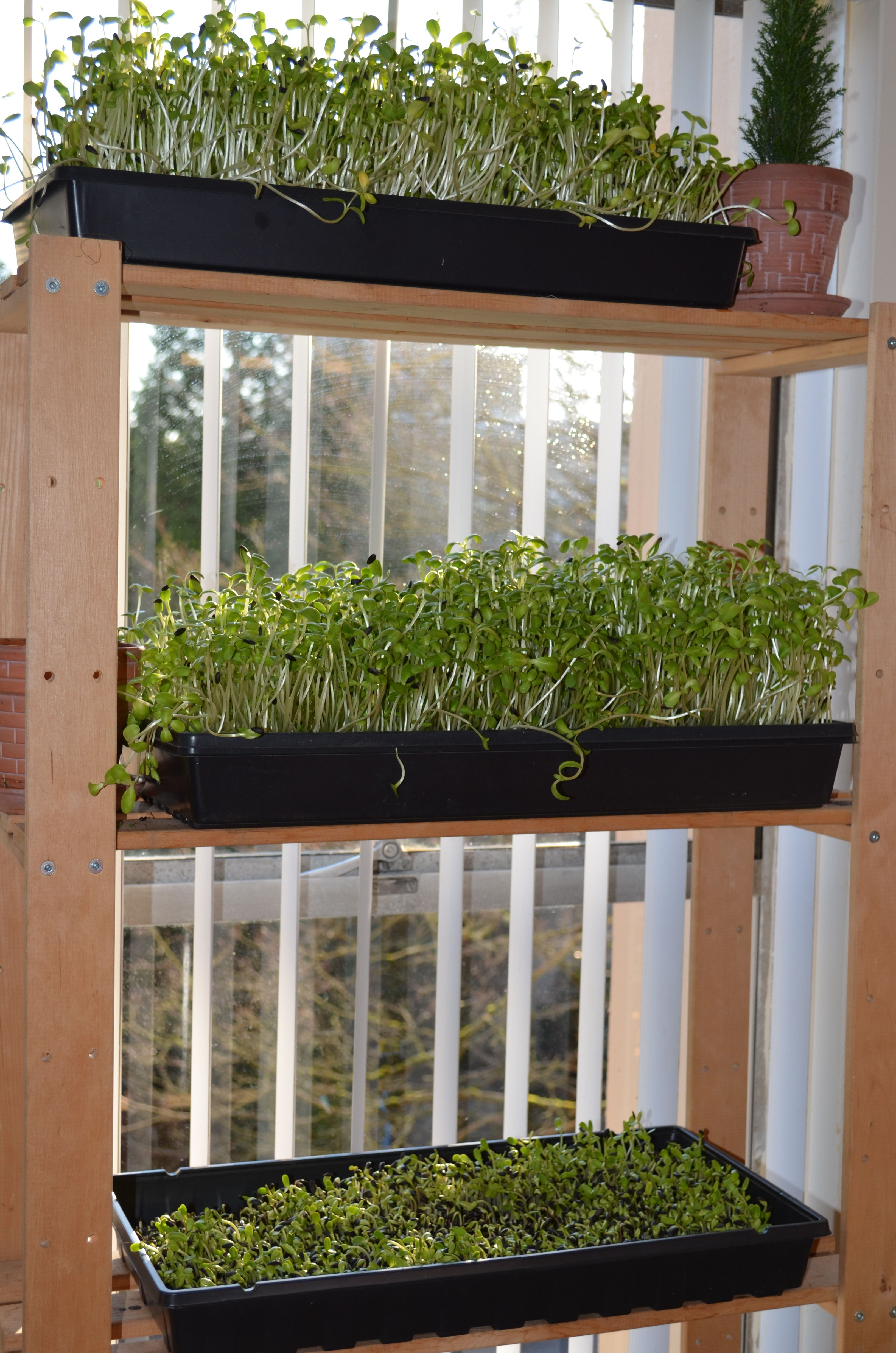 Chantale roy jardinage urbain int rieur cultiver des for Jardinage d interieur
