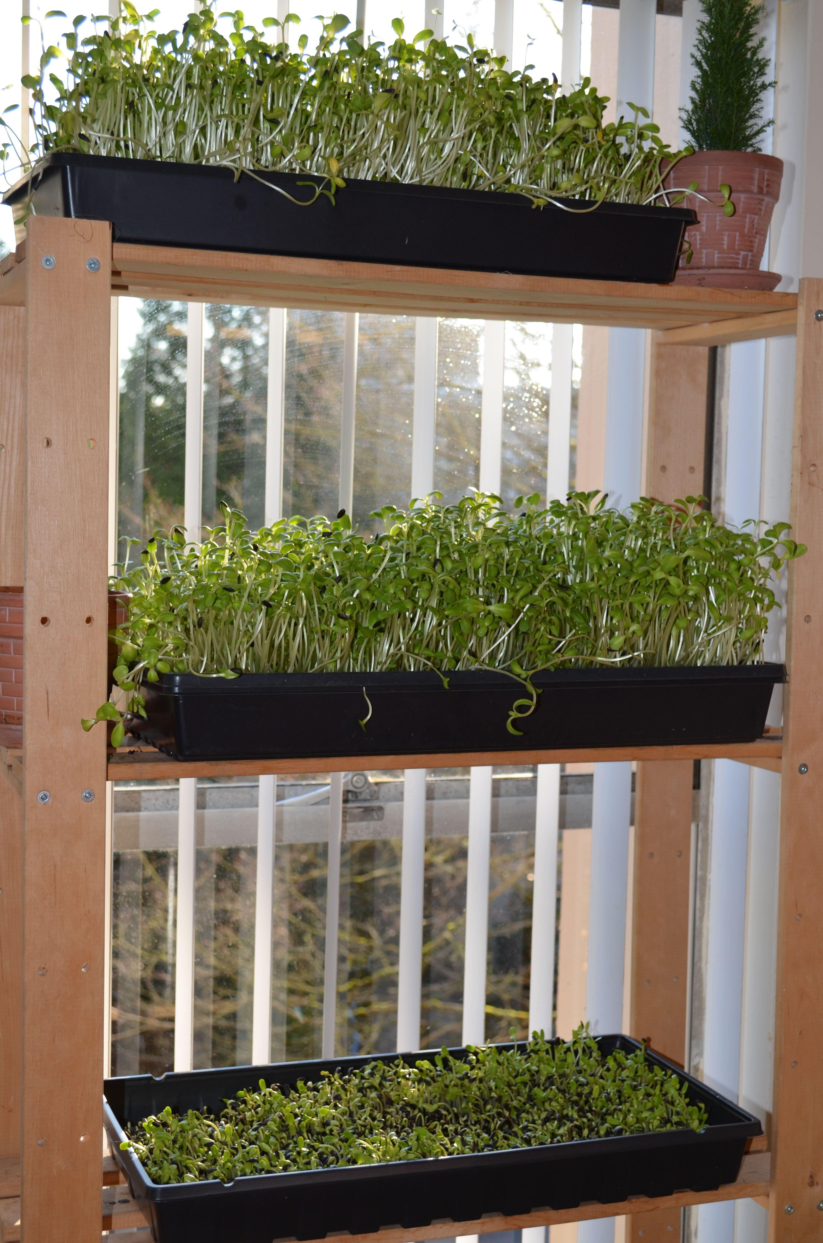 chantale roy jardinage urbain int rieur cultiver des. Black Bedroom Furniture Sets. Home Design Ideas