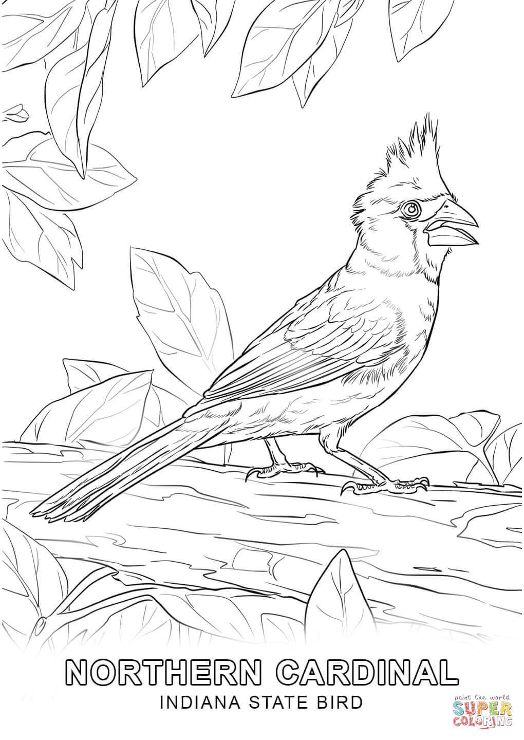 click the indiana state bird coloring pages