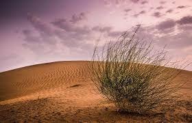 Resultado de imagem para deserts