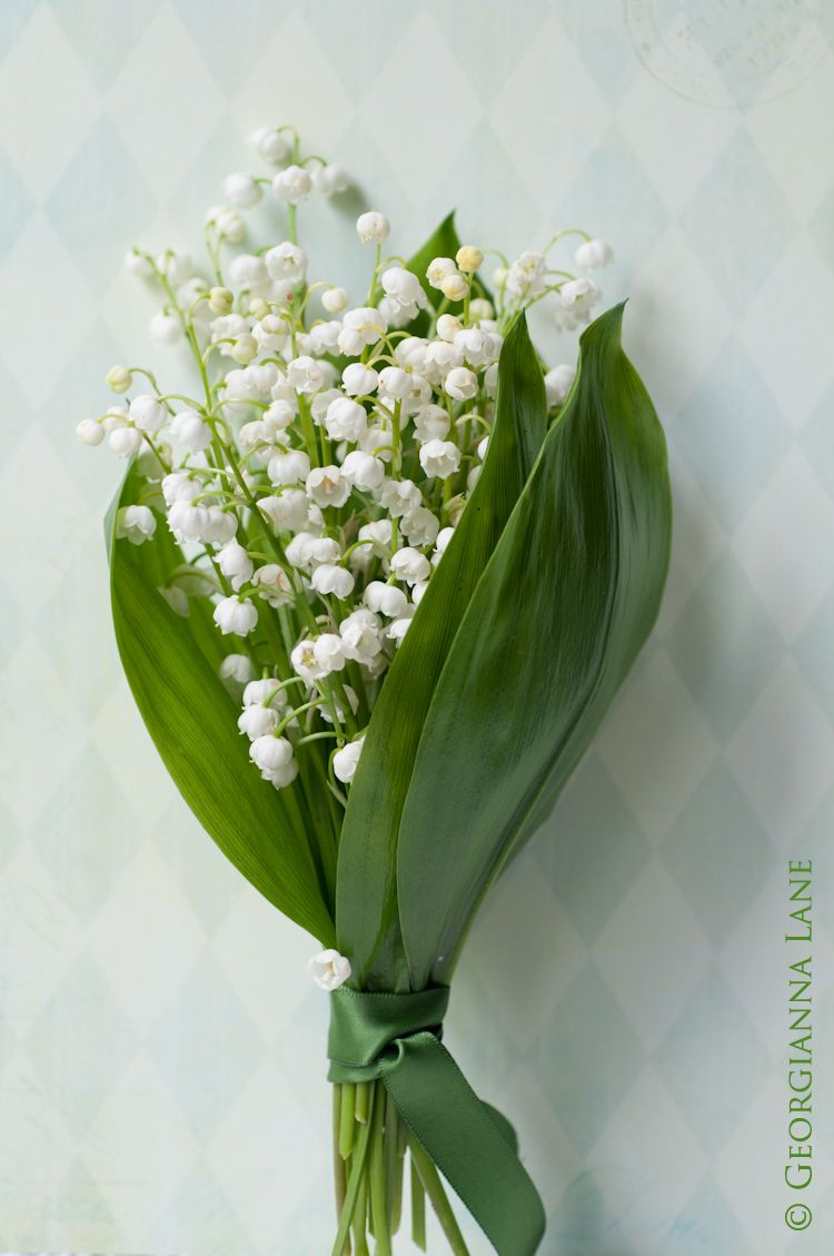 Lily Of The Valley Photo By Georgianna Lane Traditional Symbol For