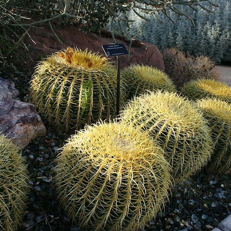 Star Nursery Garden Center S Plant