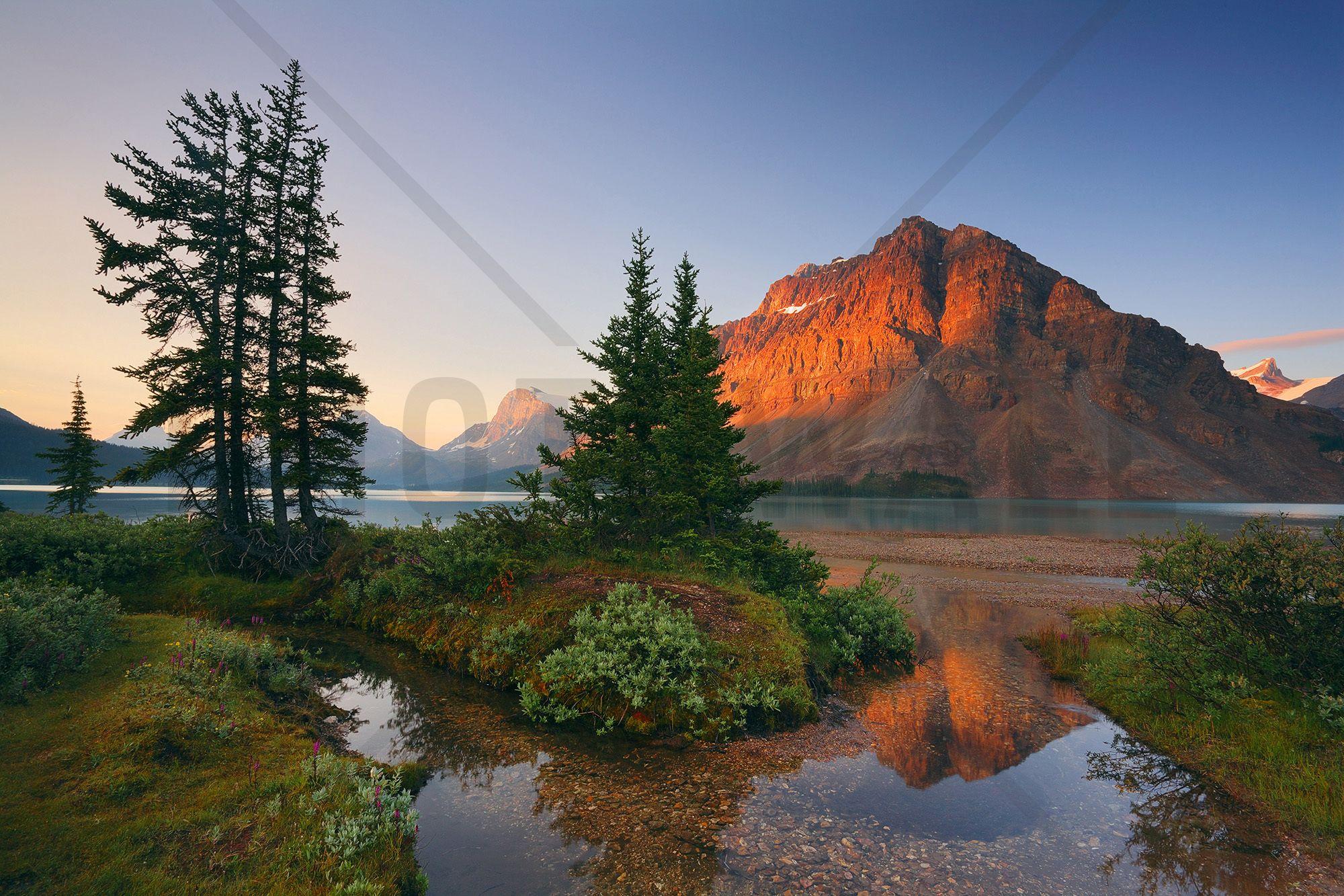 Crowfoot Mountain Reflection Wall Mural & Photo