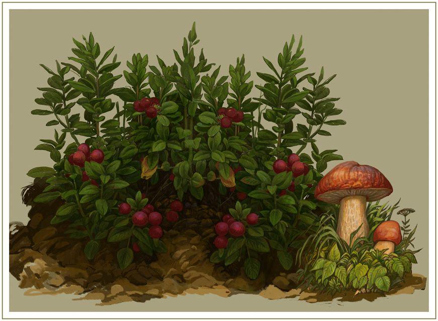 рисунок грибы и ягоды в лесу косплее должно