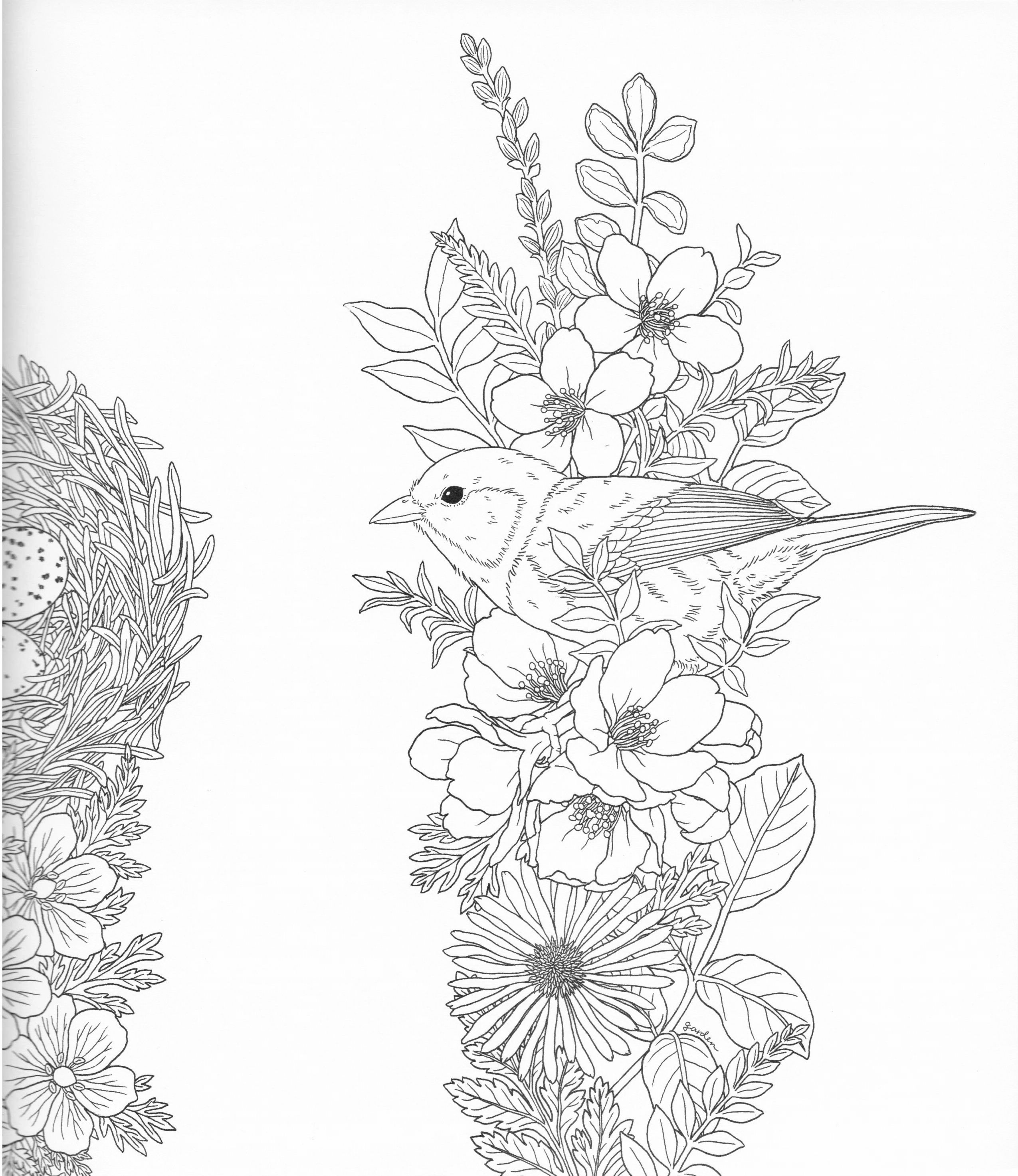 Drawing pages of nature - Harmony Of Nature Adult Coloring Book Pg4