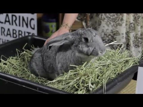 Rabbit diet on ehow- 70% hay from grasses like Timothy grass, etc.