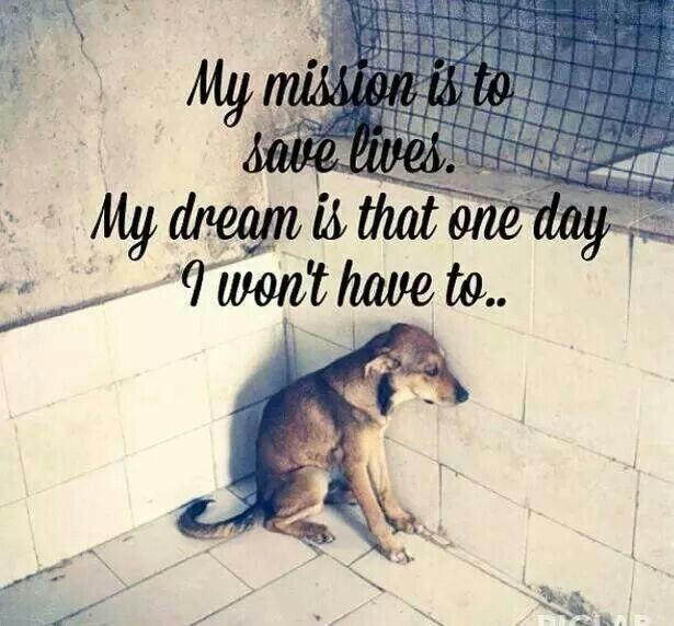 My Mission Animal Advocacy Homeless Pets Animal Quotes