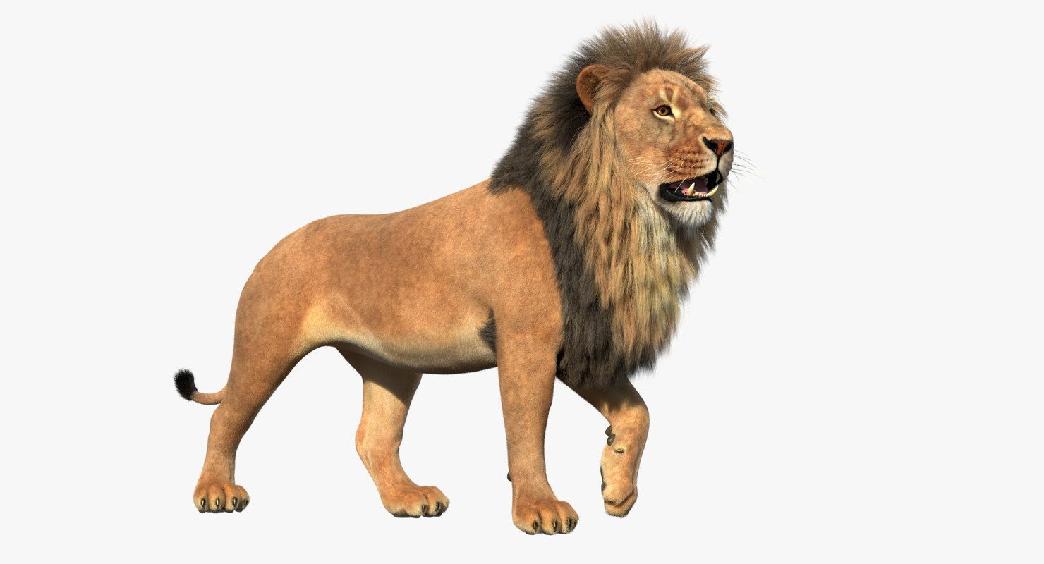 3d Lion Rigged 3d Lion Model 3d African Lion Model A Realistic Model Of An African Lion Lion 3dlion 3dlionmodel 3dafricanlion Lion African Lion Animals