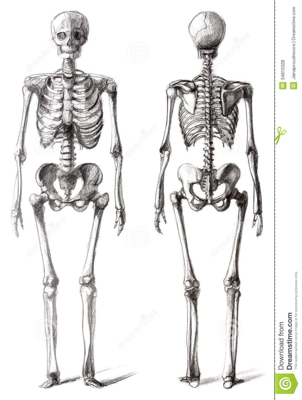 Drawing Skeleton - Download From Over 35 Million High