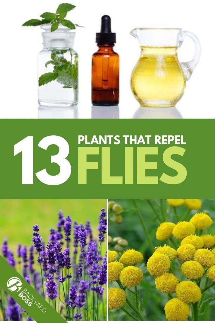 13 Plants That Repel Flies #mosquitoplants