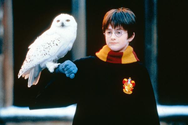 Harry Holds Hedwig Harry Potter Fan Zone In 2020 Harry Potter Wallpaper Harry Potter Movies Harry Potter