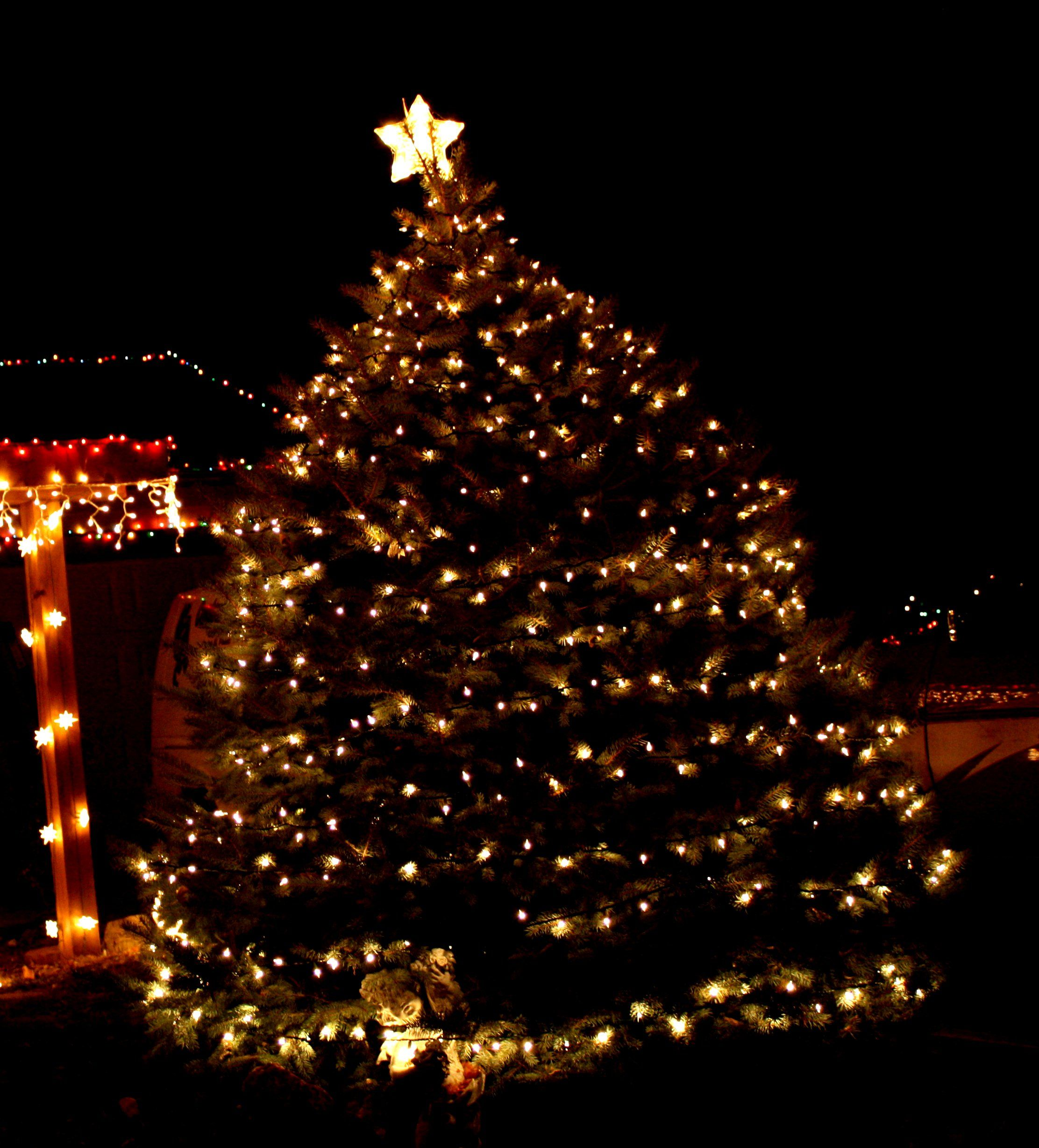 Christmas Lights | Featues An Outdoor Christmas Tree Decorated With White  Holiday Lights .