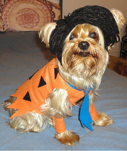 fred flintstone halloween costumes for dog see more dog costumes and halloween party ideas at - Halloween Flintstones