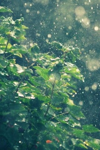 Summer Rain Water Drops Bokeh Iphone 6 Wallpaper Rainy Wallpaper Iphone Rainy Wallpaper Ipad Air Wallpaper