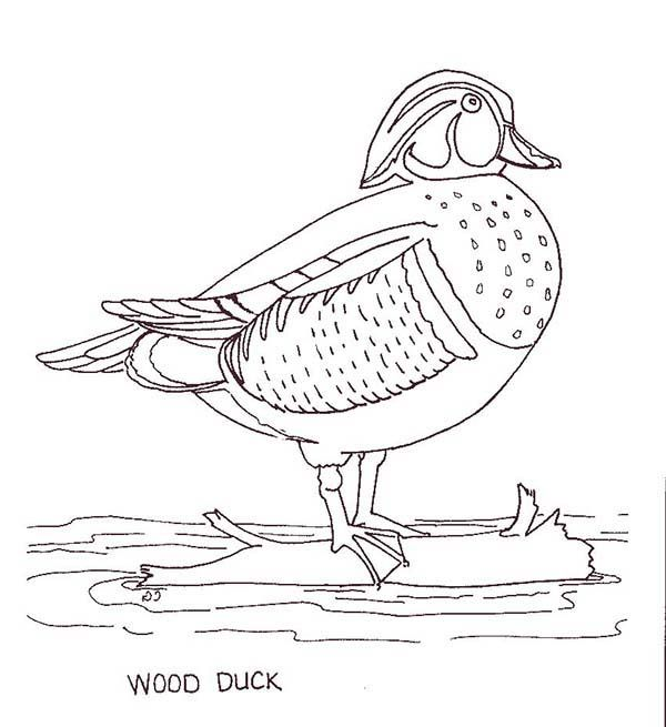 Duckling Wood Duck Duckling Coloring Page Dinosaur Coloring Pages