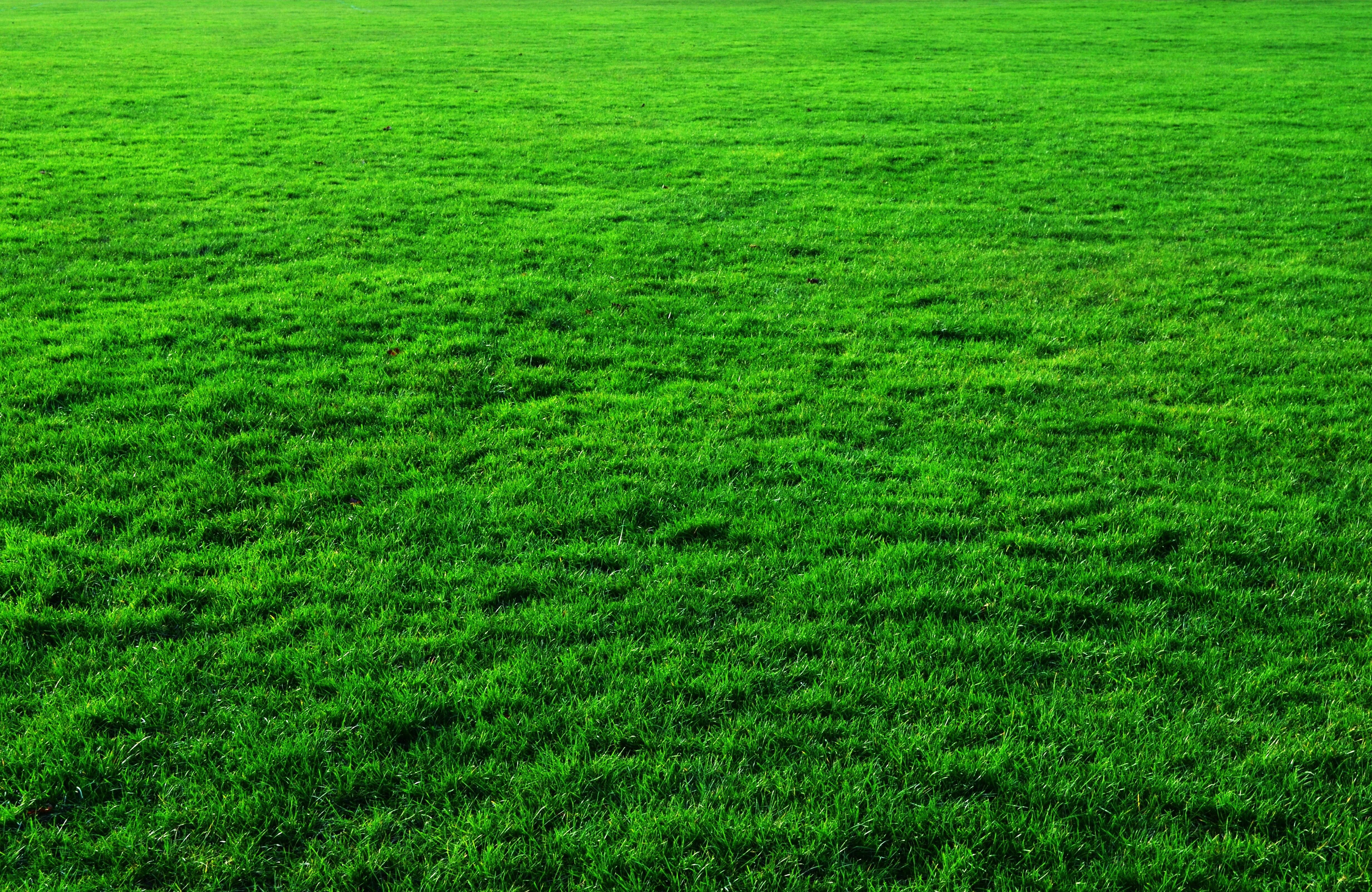 Green grass background green grass background photos
