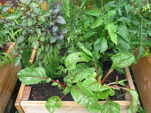 How To Grow A Windowsill Herb Garden Container Herb 400 x 300