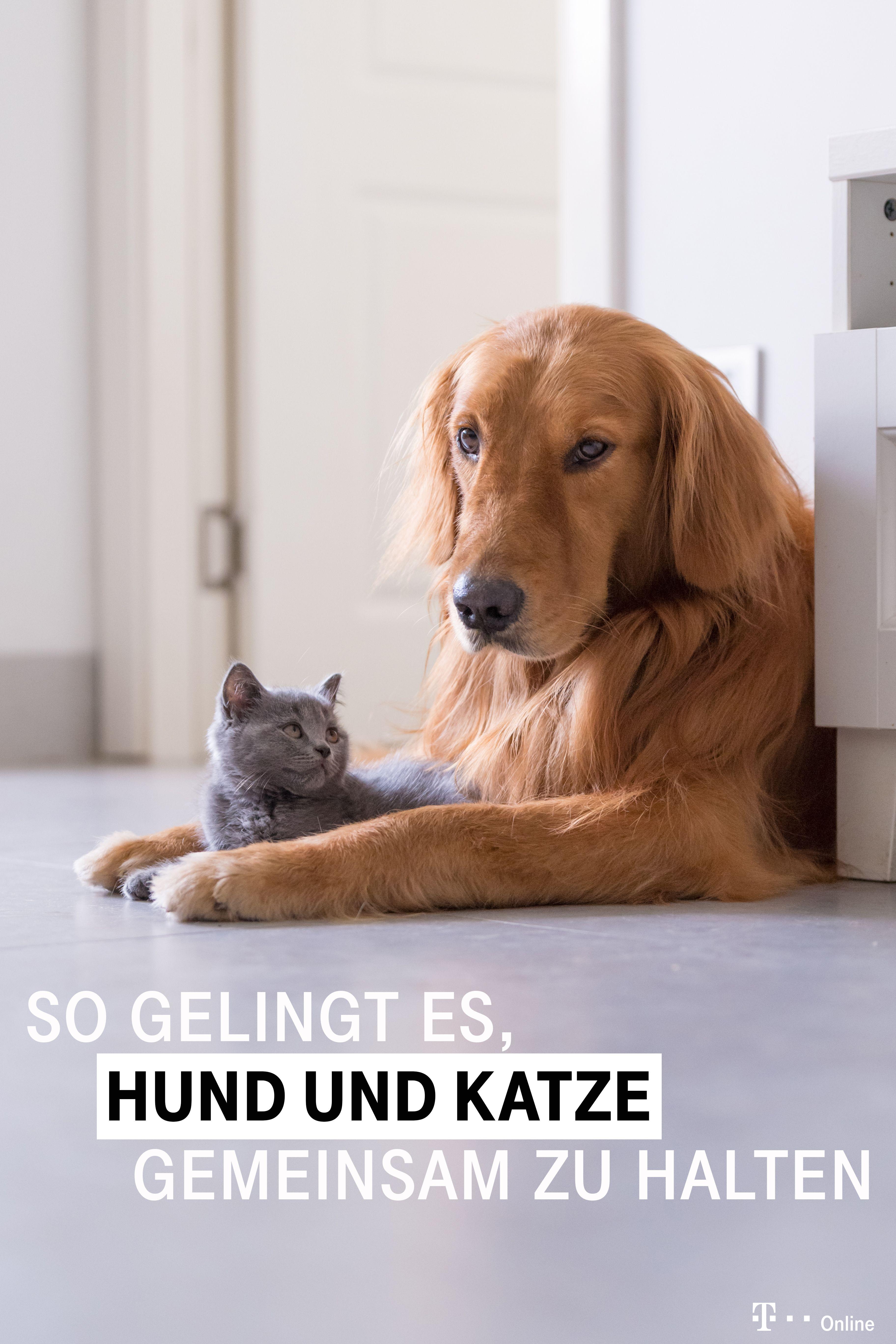 Katzen Und Hunde Gemeinsam Halten So Gelingt Es Hunde Katzen Hund Und Katze