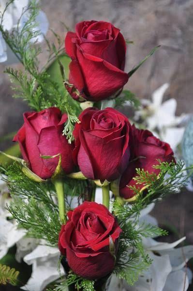 facebook - Mis Flores
