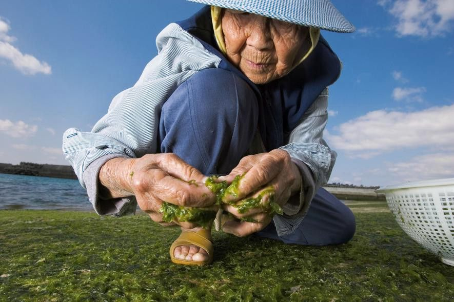 Otoño Tiempo De Cosecha National Geographic En Español Algas Comestibles Okinawa Pescados Y Mariscos