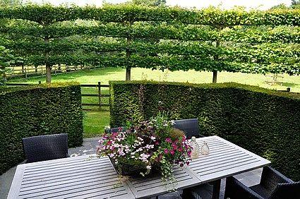 Cordon Espalier | terrasse jardin | Garden Design, Privacy ...