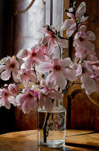 Magnolia: Perseverance, Nobility