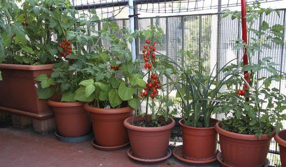 Scopri le verdure più facili da coltivare nel tuo ...