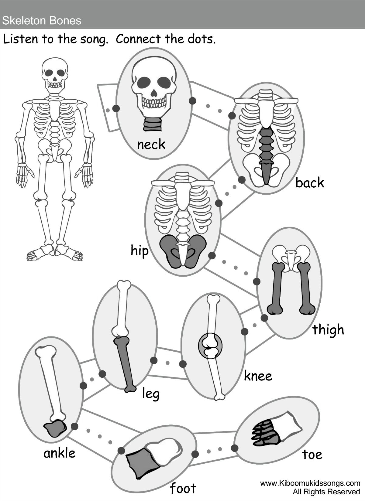 Skeleton Bones Song And Worksheets