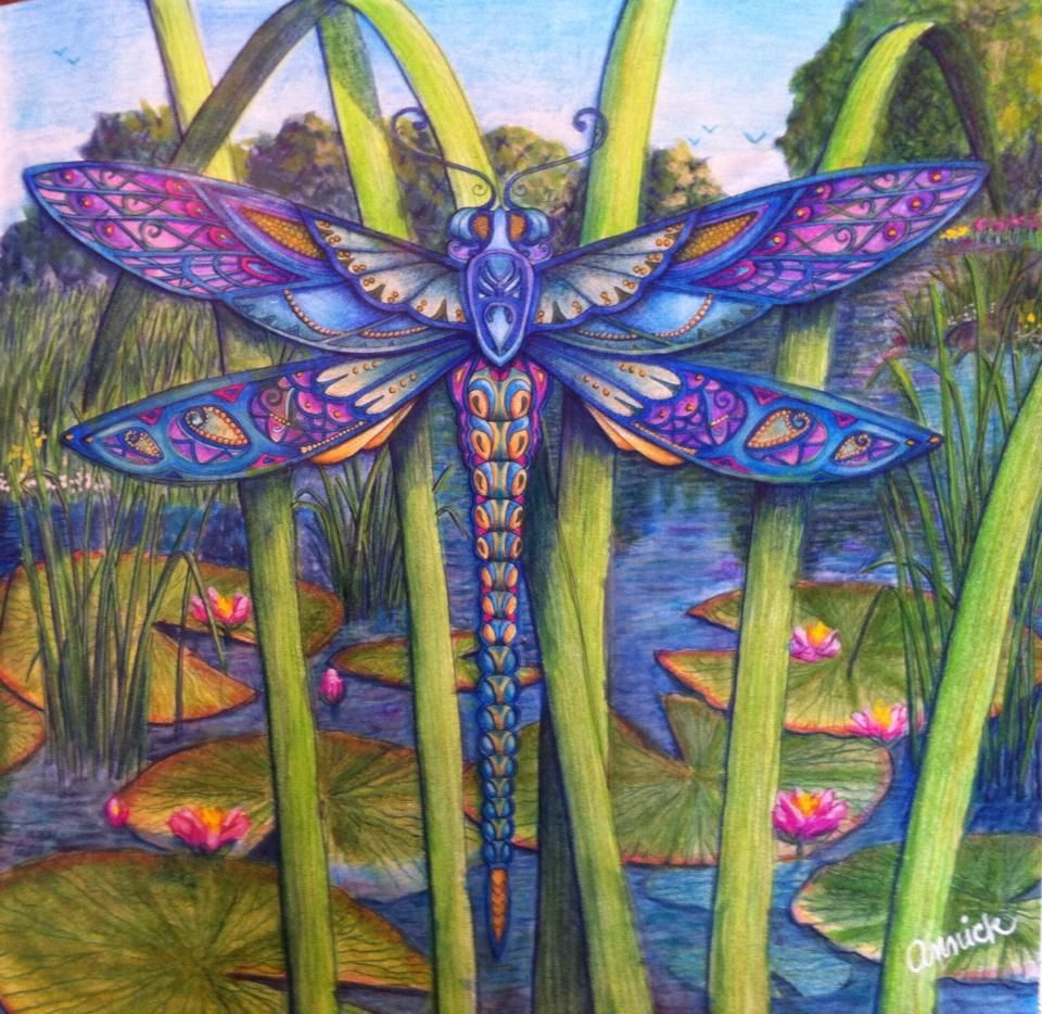 johanna basford enchanted forest floresta encantada dragonfly