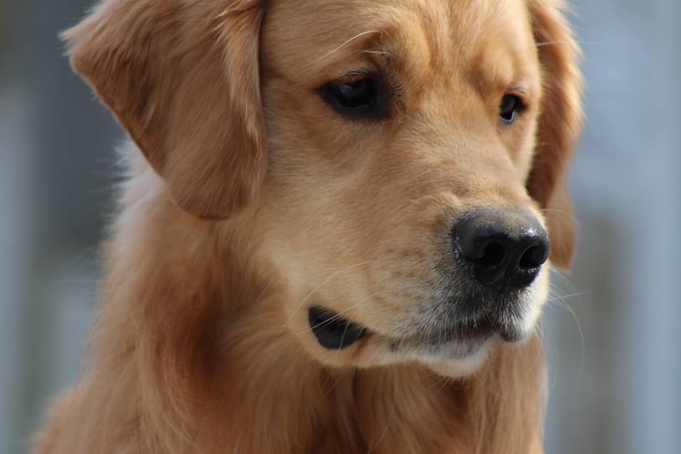 Dog Show Wrentham Ma