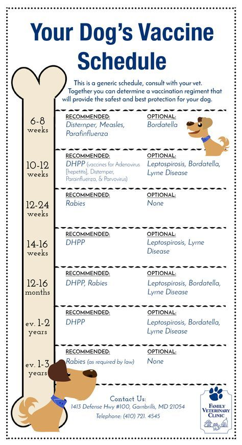 Dog Vaccine Schedule Chart >>> Want to know more, click on