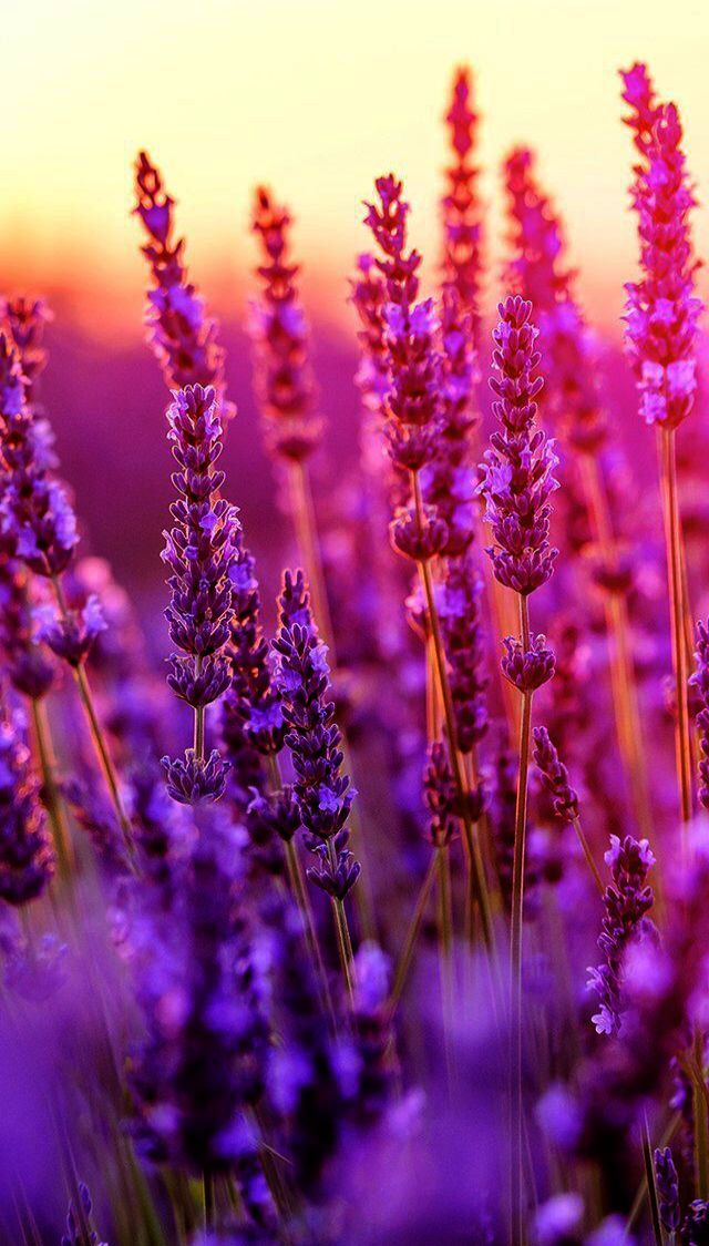 New Wallpapers For Iphone X Max Wallpaper Iphone Tumblr Anime But Iphone Xs Wallpapers Nature Photography Flowers Purple Flowers Wallpaper Spring Wallpaper Spring wallpaper for iphone xs max
