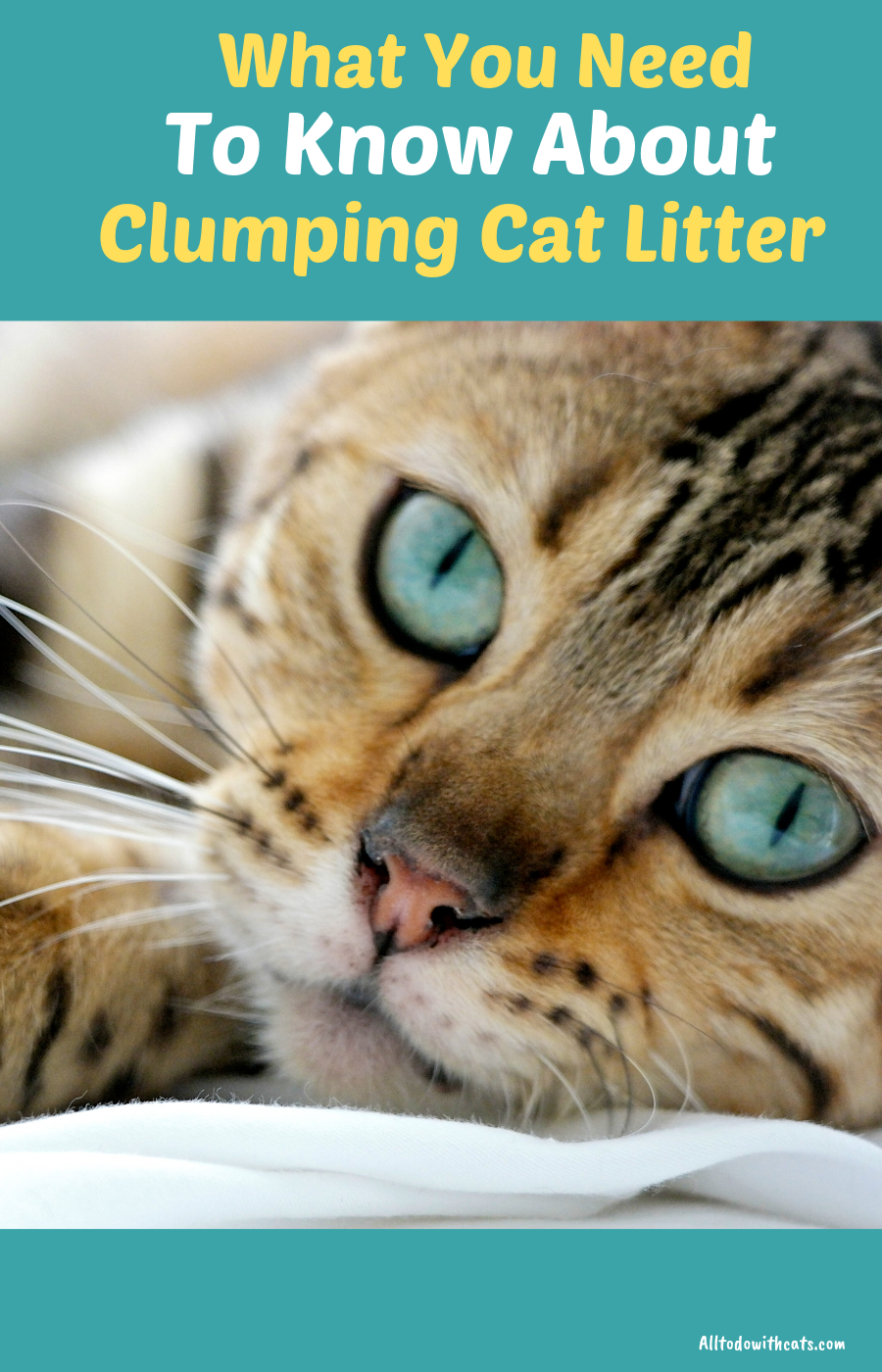 Is Clumping Cat Litter Safe And Does It Stop Odour All To Do With Cats Clumping Cat Litter Cat Litter Cats