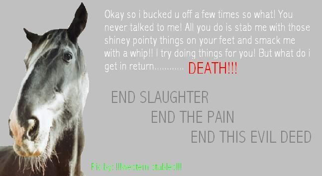killing horse quotes for facebook | Horse Slaughter has ...