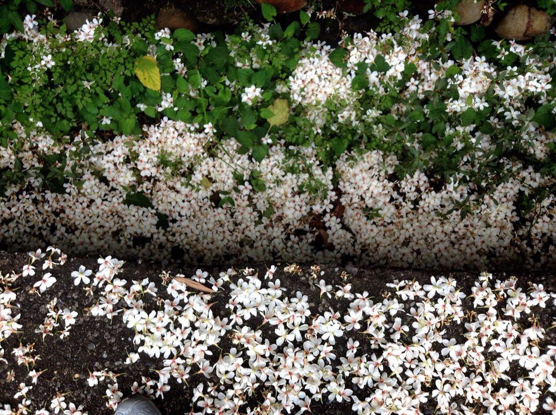 Beautiful flowers on the ground - Taipei