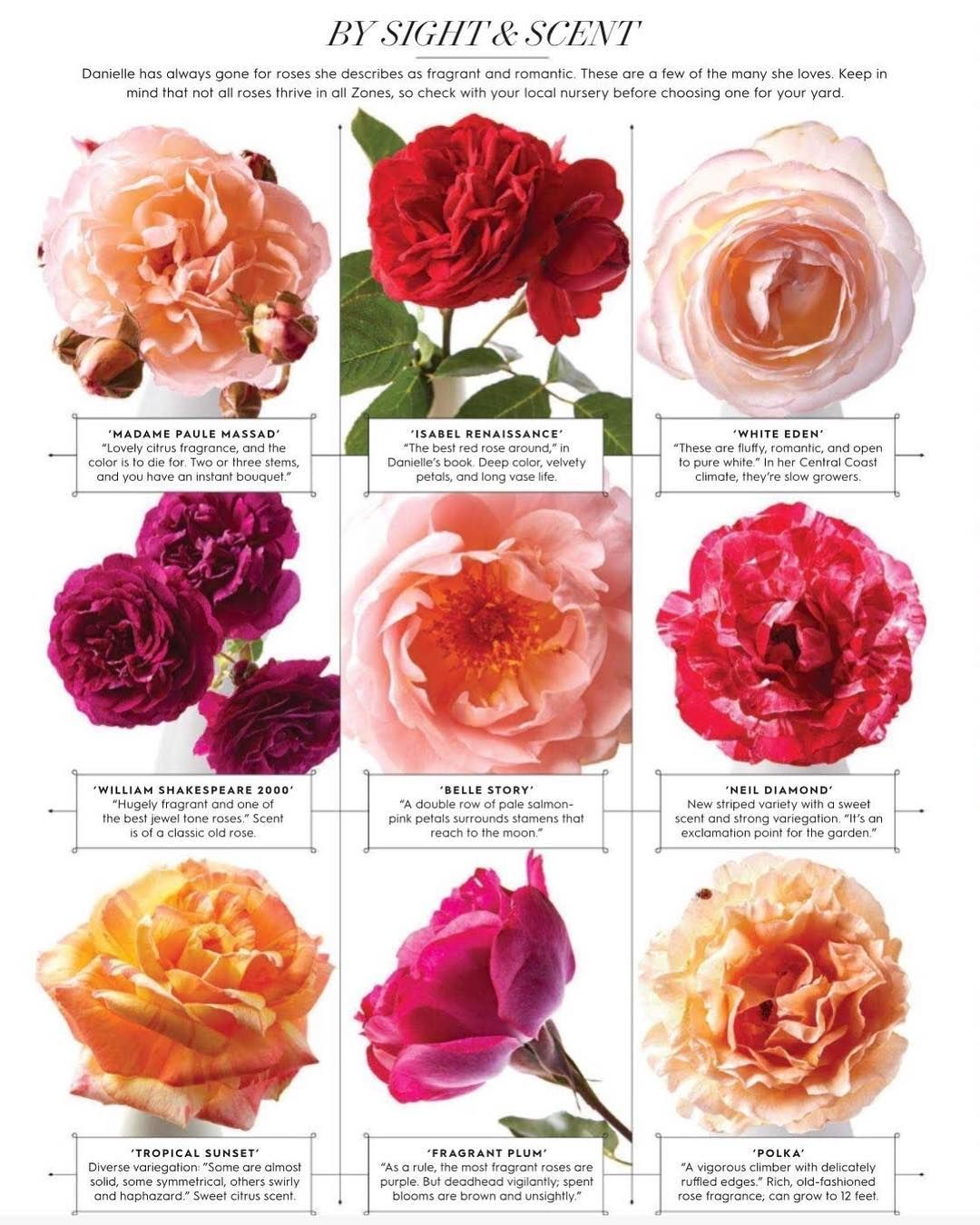 Love This Beautiful List Of Rosestoryfarm Roses In Betterhomesandgardens The Descriptions Alone Get Us Excited For Our Upcoming Workshop For More Det Flores