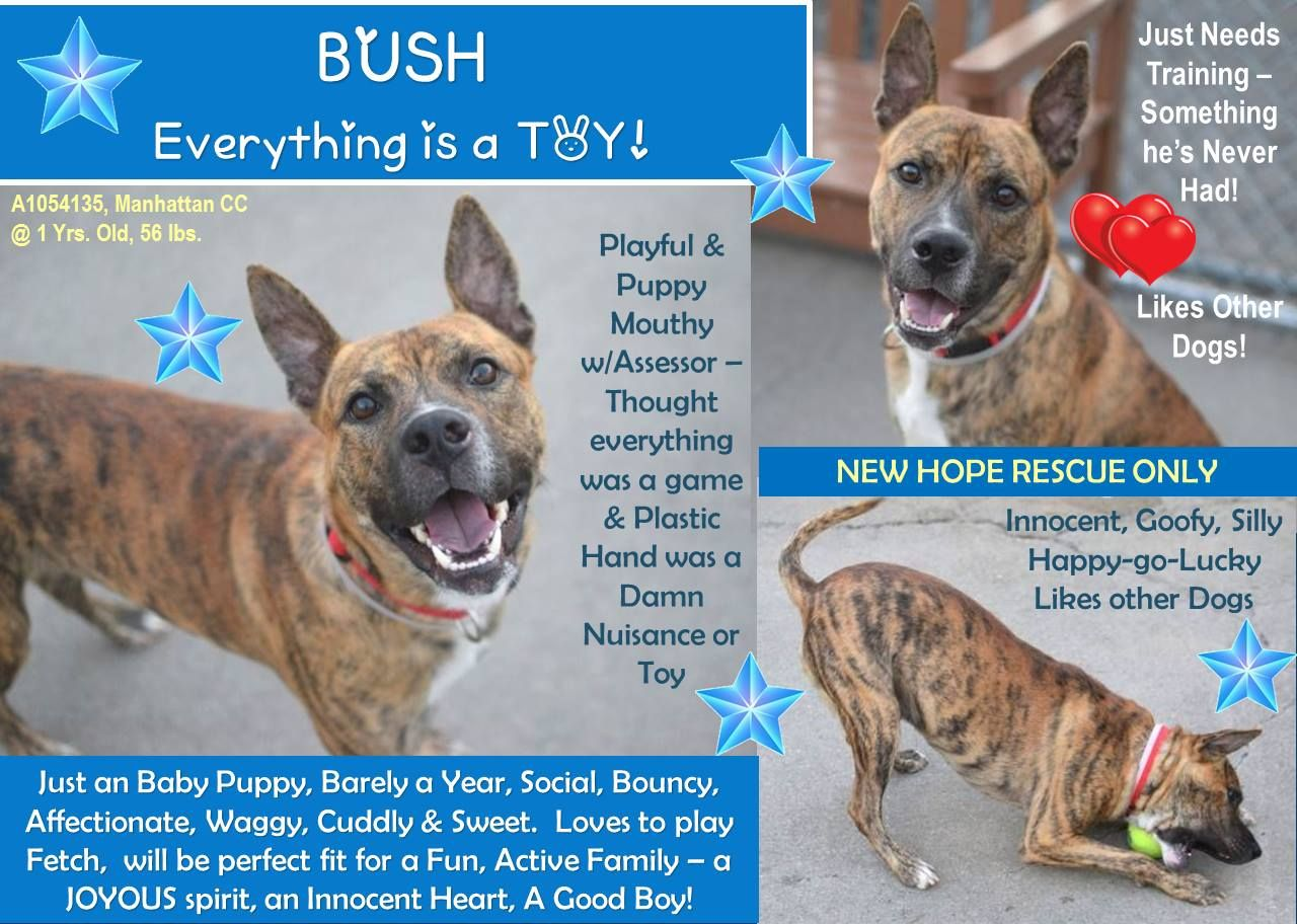 TO BE KILLED 10/13/15 BUSH NYC ACC MANHATTAN CENTER