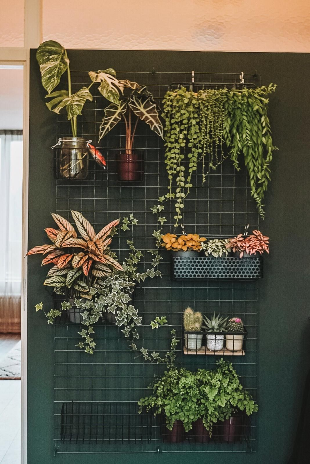 Photo of My plant wall, update 2