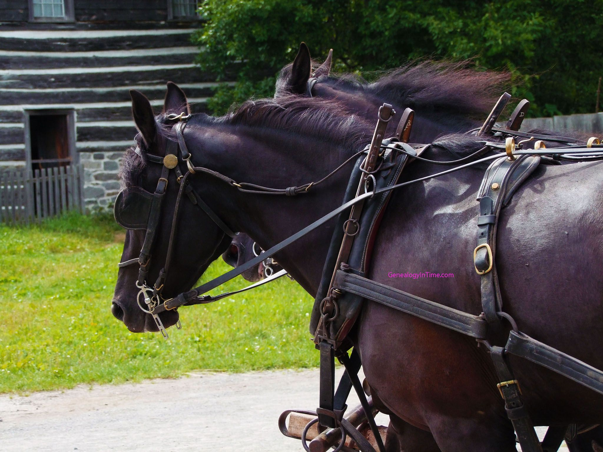 small resolution of draft horses