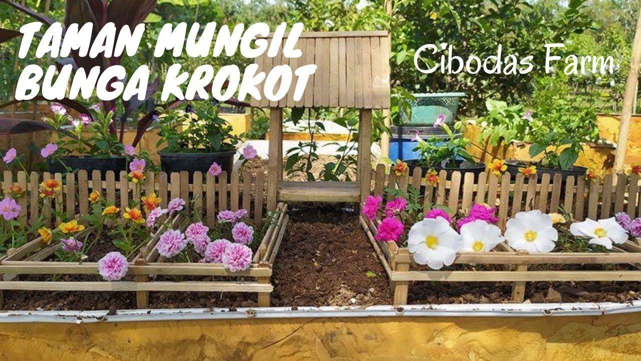 Taman Mungil Bunga Krokot Dengan Nuansa Pedesaan Cibodas Farm Bunga Taman Pedesaan