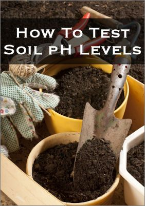 Quick method to test soil ph with baking soda and vinegar.