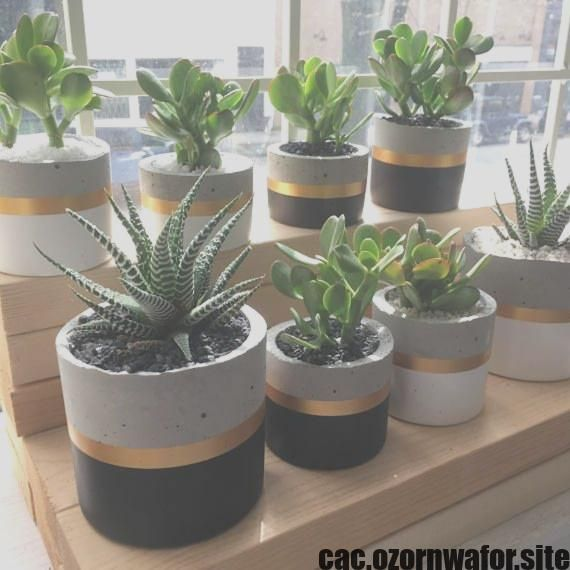 Wonderful Free unique cactus plants Concepts Plants as well as cacti include the perfect household decorations with regard to minimalists along with craze