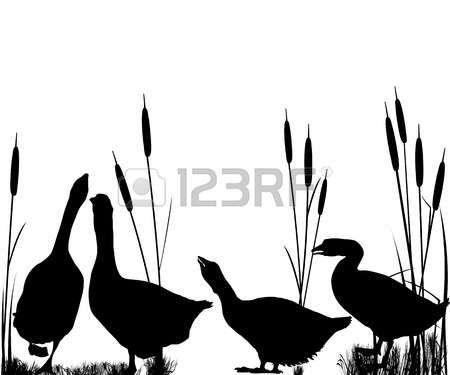 canard nageant blanc goose et roseaux silhouettes sur. Black Bedroom Furniture Sets. Home Design Ideas