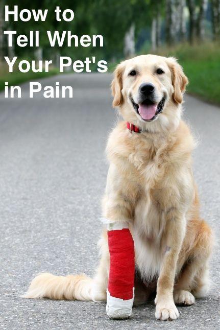 Pet Parent Resources | ASPCA® Pet Health Insurance | Dog ...