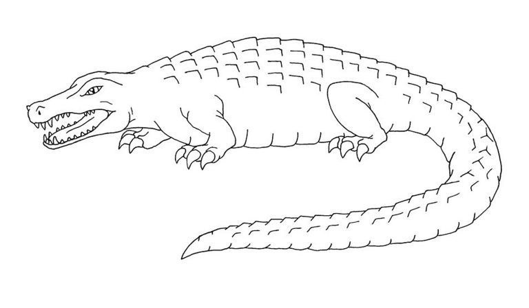 Free Printable Alligator Coloring Pages For Kids In 2020 Coloring Pages Animal Coloring Pages Transformers Coloring Pages