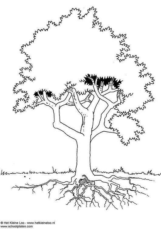 Dibujo Para Colorear árbol Talleres Partes De La Misa Dibujos